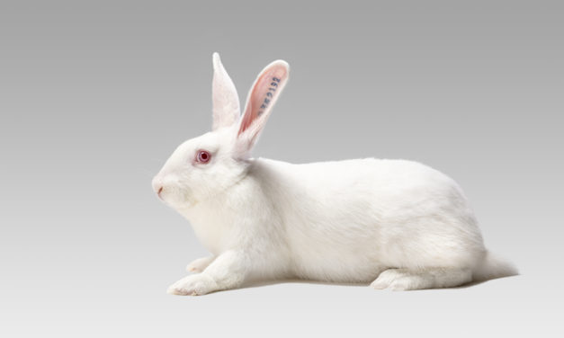HYPHARM'S OPTIMA RANGE, A RESPONSE TO THE SUSTAINABILITY CHALLENGES OF THE RABBIT FARMING SECTOR