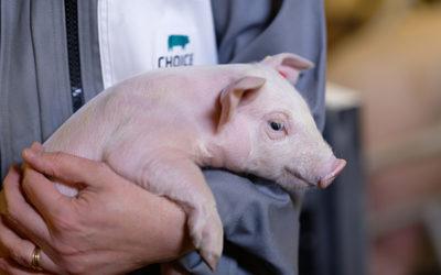 Stagiaire Ingénieur(e) R&D génétique animale (H/F)